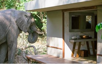 Elephant in the Ablution Block