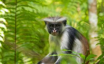 Monkey in Zanzibar