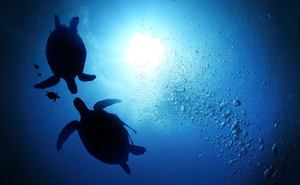 Turtles in the Philippines