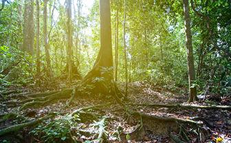 The rainforest floor