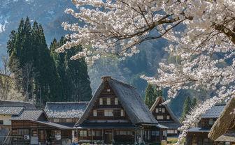 Shirakawago Houses