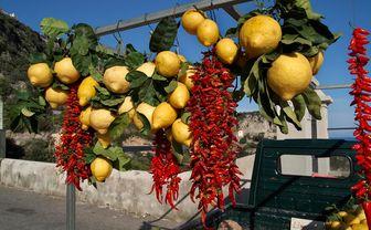 Lemons and chillies on the Amalfi Coast