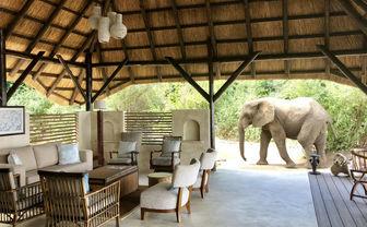 Reception Room Elephant