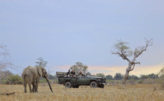 Safari truck and elephant