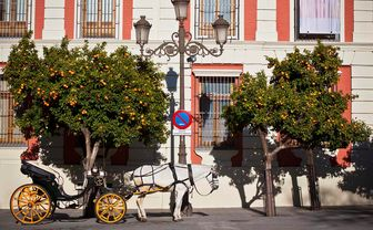 Seville horse and carriage
