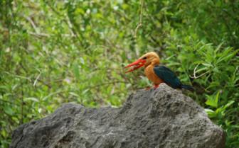 Picture of Wildlife on Ariara Island