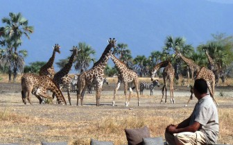 Watching giraffes at a water hole