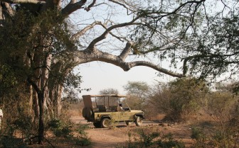 Game drives with experiences guides