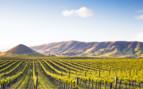 A Napa Valley Vineyard