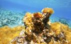 Orange Coral in Ibiza