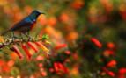 A Bright Bird on a Branch in Rwanda