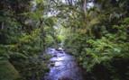 A River in Bwindi Park