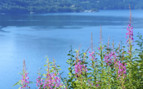 Boknafjord Flowers