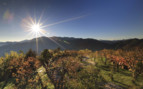 Barossa Valley in the Sunshine