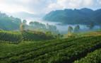 Strawberry Fields of Doi Ang Khang