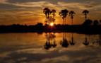 Moremi Sunset Okavango