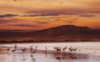 Flamingos on the Namibian coast