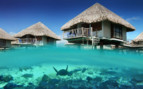 Over water bungalow and sea life