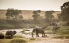 Elephants at Sala's Camp