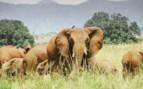 Kidepo National Park elephants