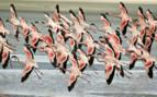 Ngorongoro Birds