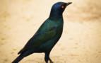 Hwange Bird