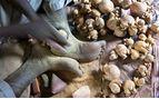 Woodcarver, Senegal