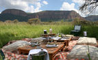 Bush picnic