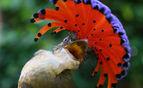 Colourful bird in Costa Rica