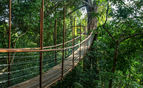 Canopy walk bridge
