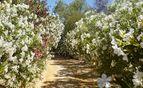 Flower walled driveway