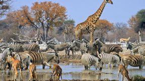 South Africa, Honeymoon