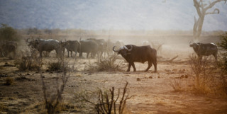 Dusty terrain with herds
