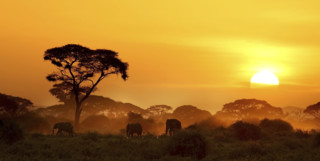 Elephants at sunset in Kenya