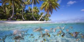 Tikehau Island