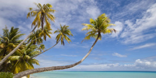 Tropical palm trees in Fiji