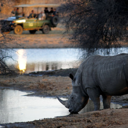 Rhino and safari vehicle