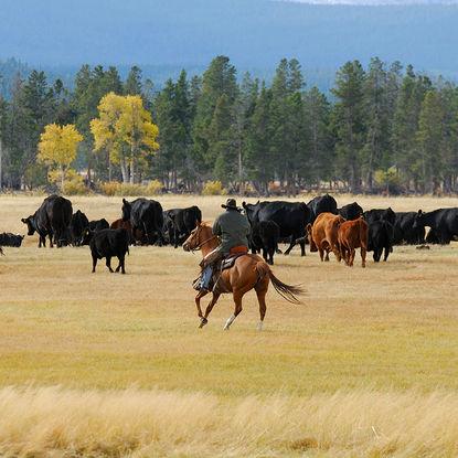 Cowboy in Montana
