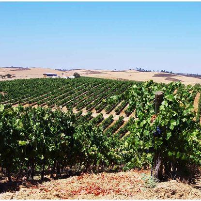 Alentejo vineyard