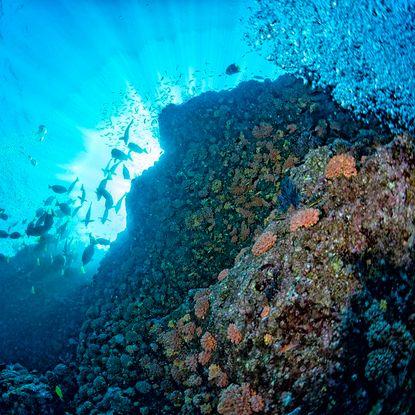 Cabo Pulmo snorkelling