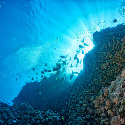 View from underwater Cabo Pulmo