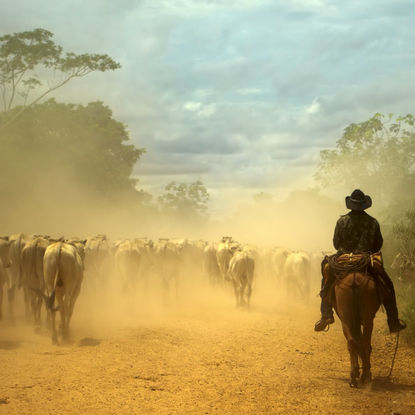 Cowboy and Horses