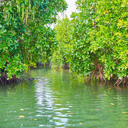 Jade Green Water in the Mangroves of the Mergui Archipelago