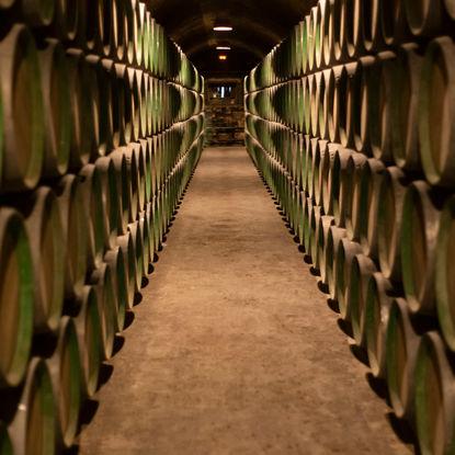 Wine Barrels in Elciego