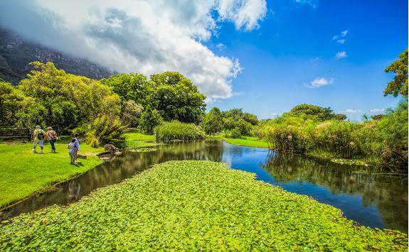 Cape Town's Botanical Gardens