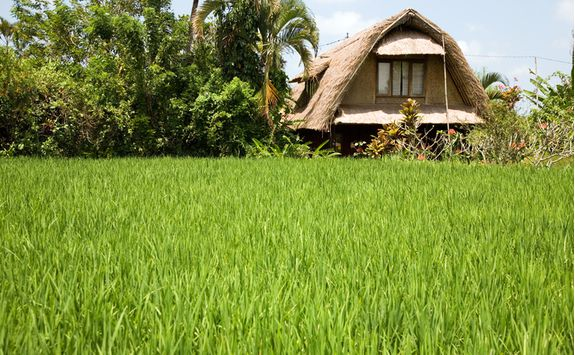 ubud rice field village