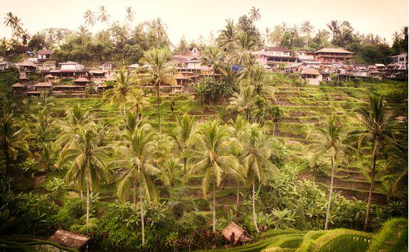 a rice plantation village in Bali
