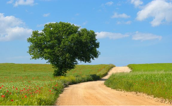 Country road through fields, Puglia