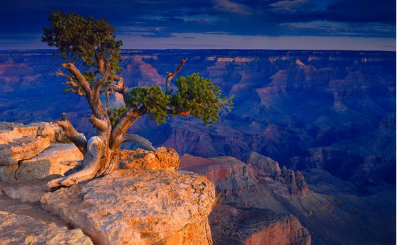 Tree perched on a cliff