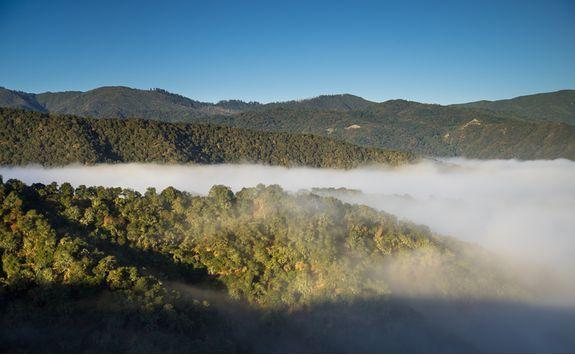 Carmel Valley Morning Fog